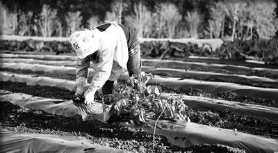 日本の農業の発展